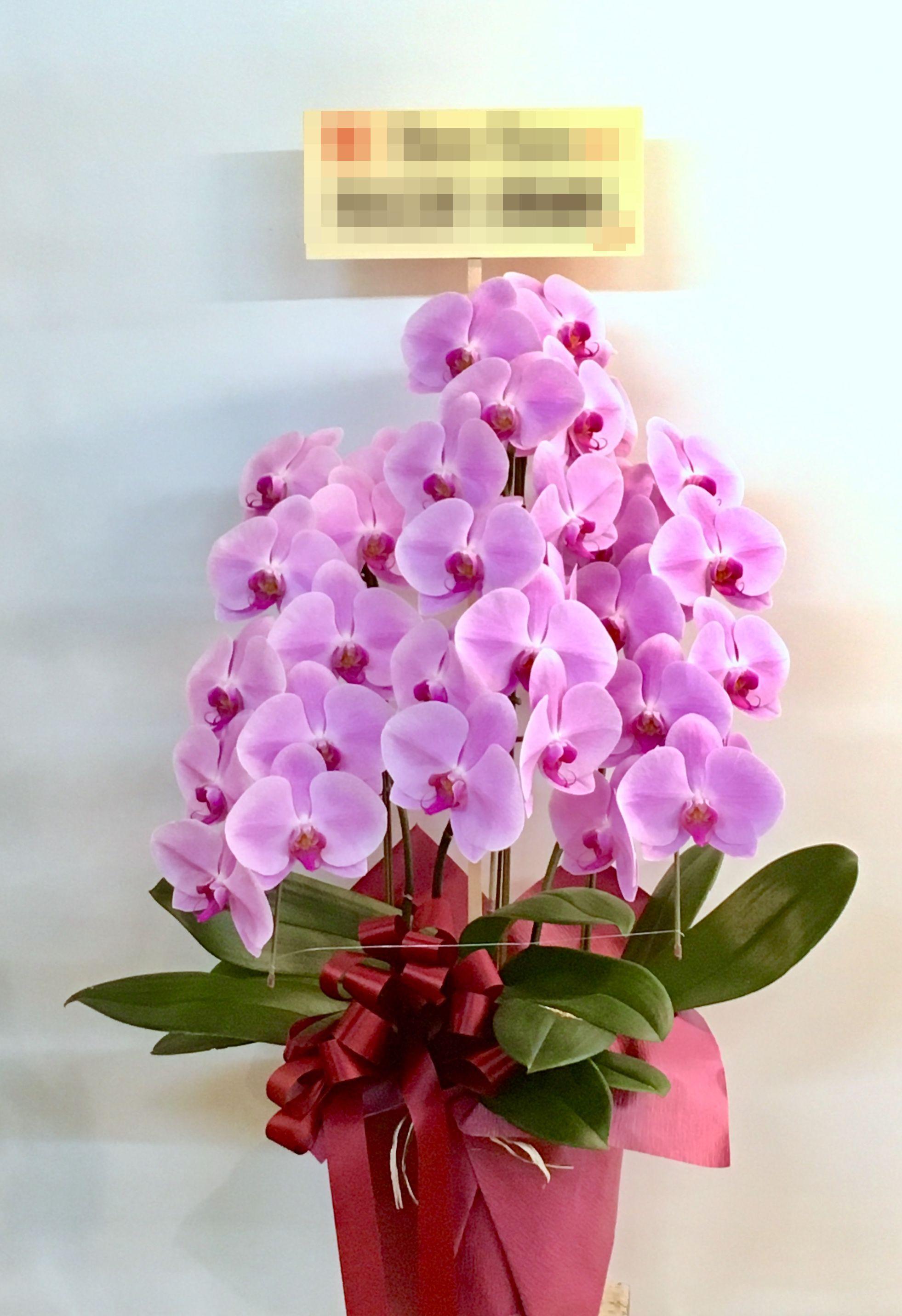 【ナオ花屋の納品事例33】横浜市関内の法人企業様へ胡蝶蘭を配達しました!
