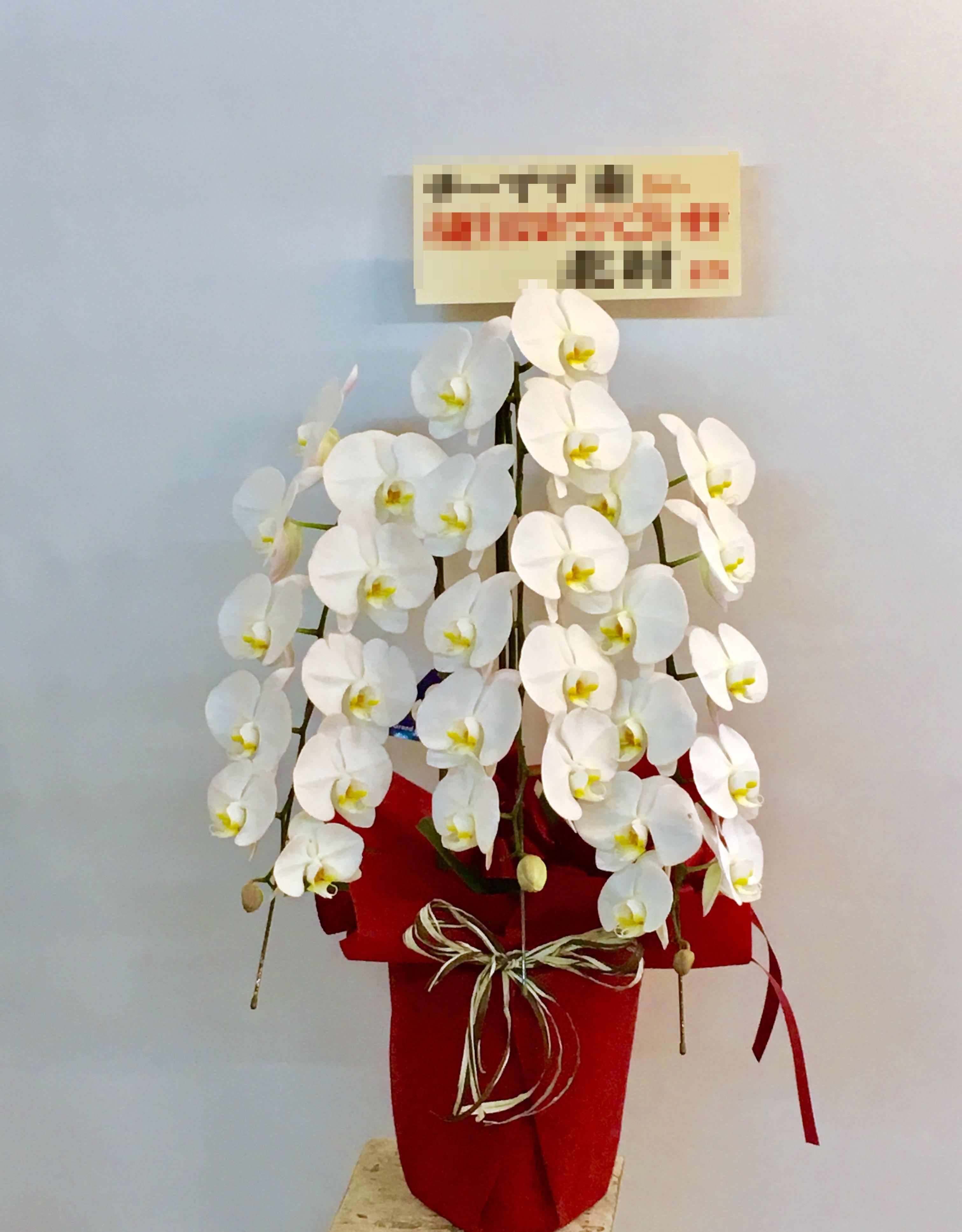 【ナオ花屋の納品事例35】横浜市関内の夜間営業飲食店様へ胡蝶蘭を配達しました!