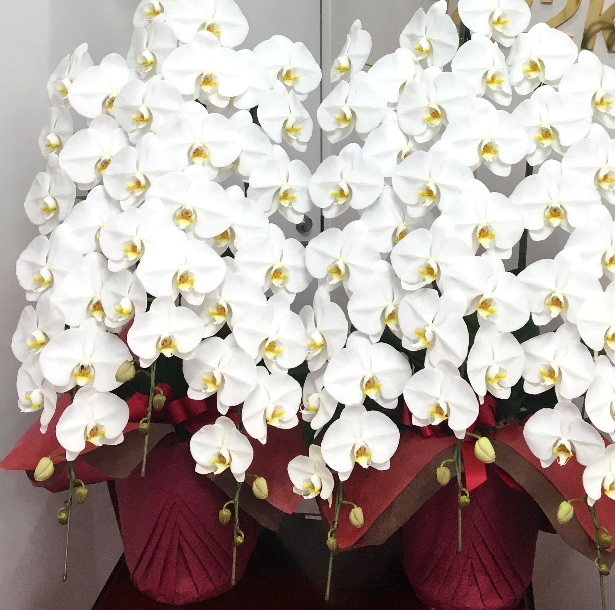 【ナオ花屋の納品事例56】横浜市中区関内の法人企業様より花束を配達しました!