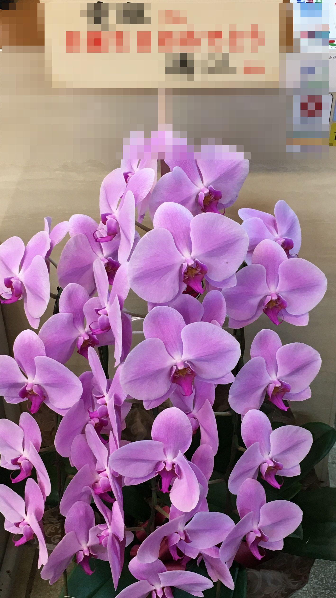 【ナオ花屋の納品事例86】横浜市関内の法人企業様へ胡蝶蘭を配達しました!