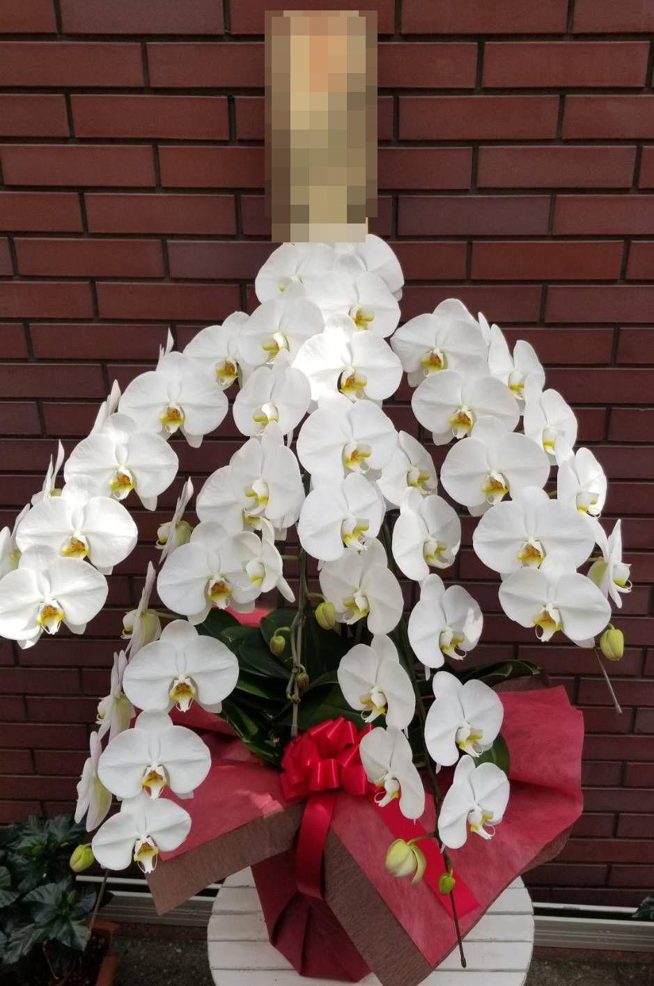 【ナオ花屋の納品事例72】東京都中野区の法人企業様へ胡蝶蘭を配達しました!