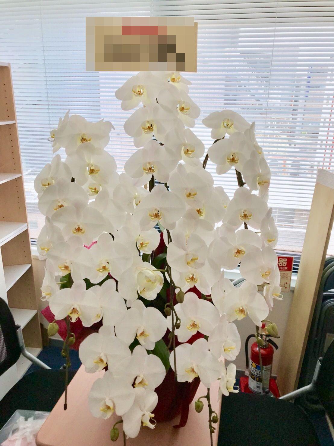 【ナオ花屋の納品事例77】川崎市の法人企業様へ胡蝶蘭を配達しました!