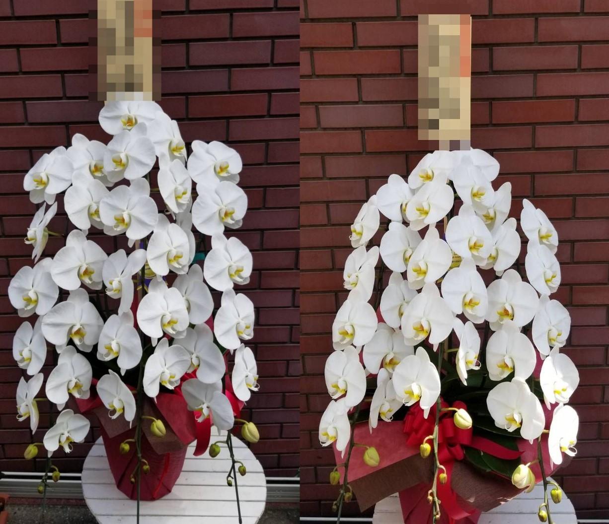 【ナオ花屋の納品事例71】東京都日本橋の法人企業様へ胡蝶蘭を配達しました!