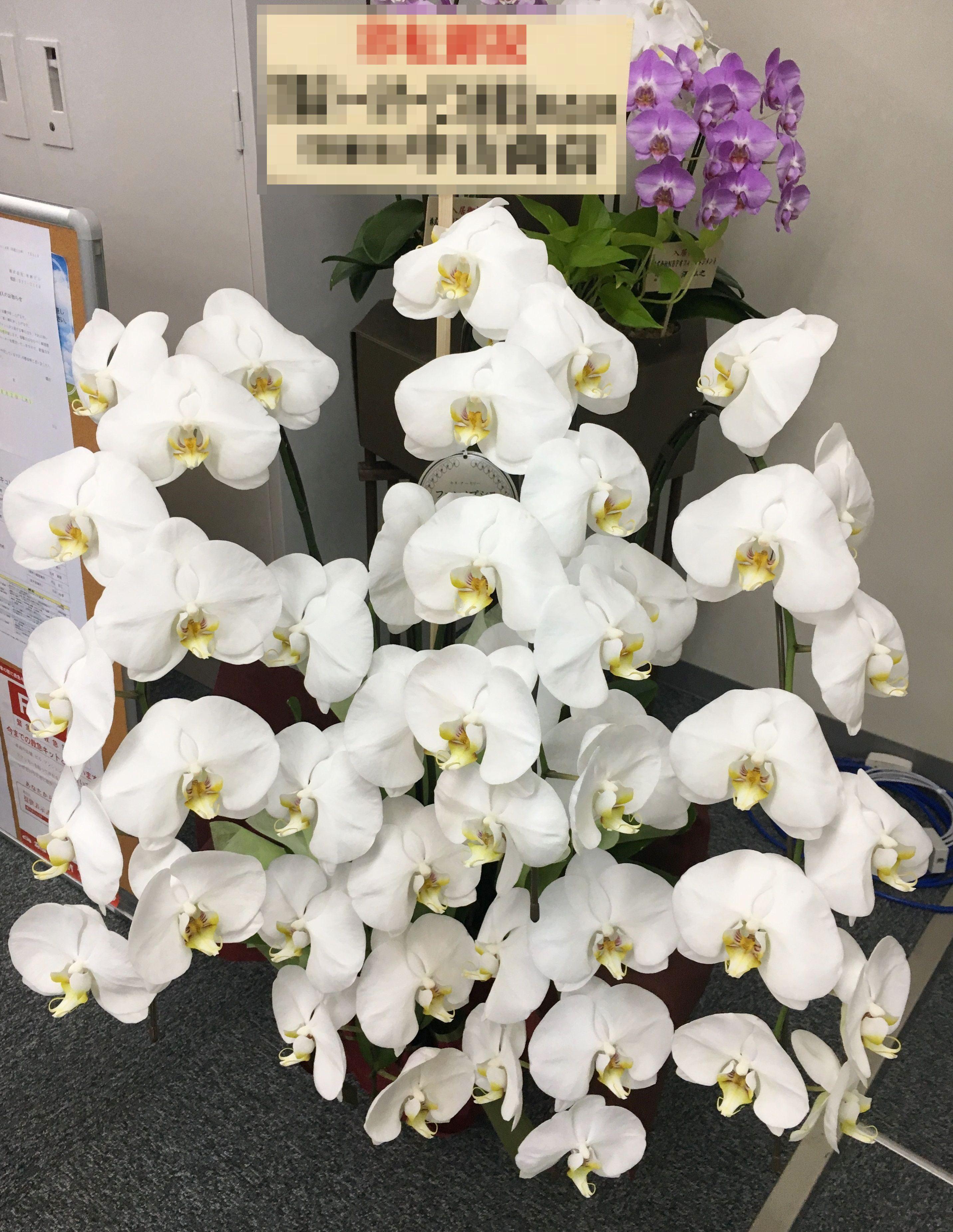 【ナオ花屋の納品事例94】横浜市北幸の法人企業様へ胡蝶蘭を配達しました!