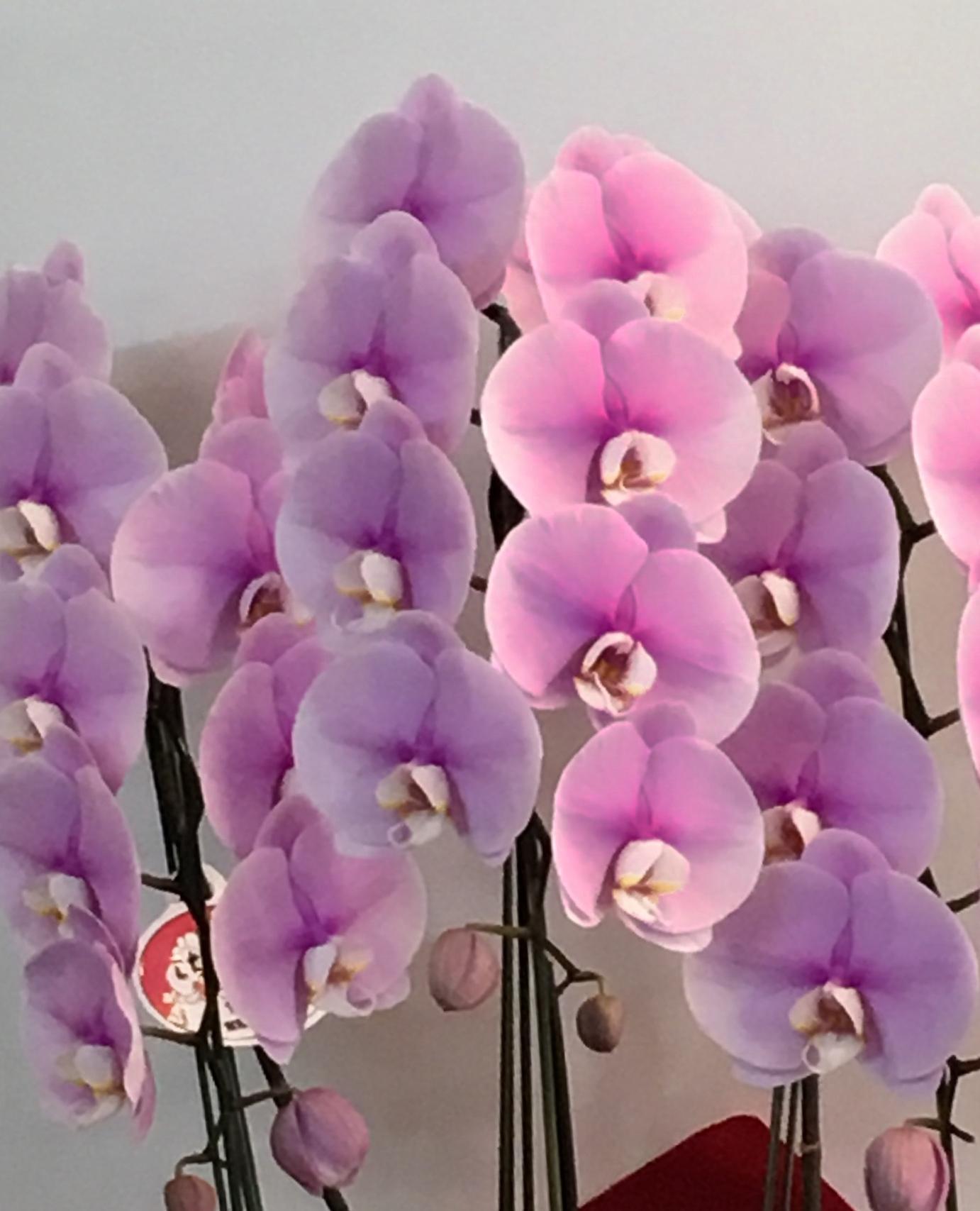 【ナオ花屋の納品事例122】横浜市関内弁天通の法人企業様へスタンド花を配達しました!