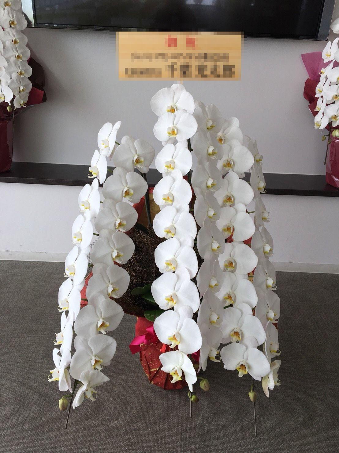 【ナオ花屋の納品事例130】横浜市関内の法人企業様へ胡蝶蘭を配達しました!