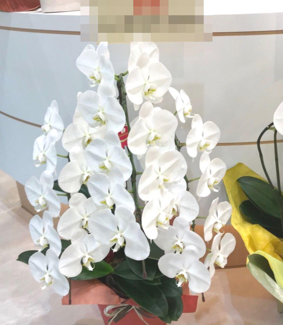 【ナオ花屋の納品事例144】横浜市関内福富町の法人企業様へスタンド花を配達しました!