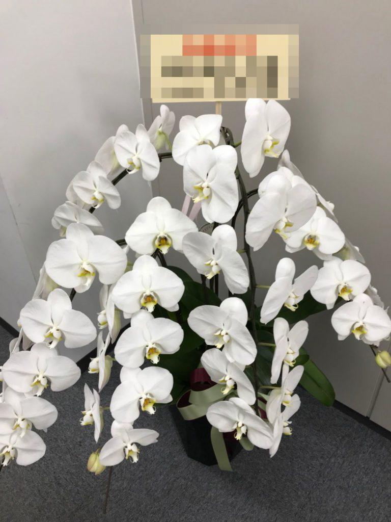 【ナオ花屋の納品事例155】横浜市戸塚区川上町の法人企業様へ胡蝶蘭を配達しました!