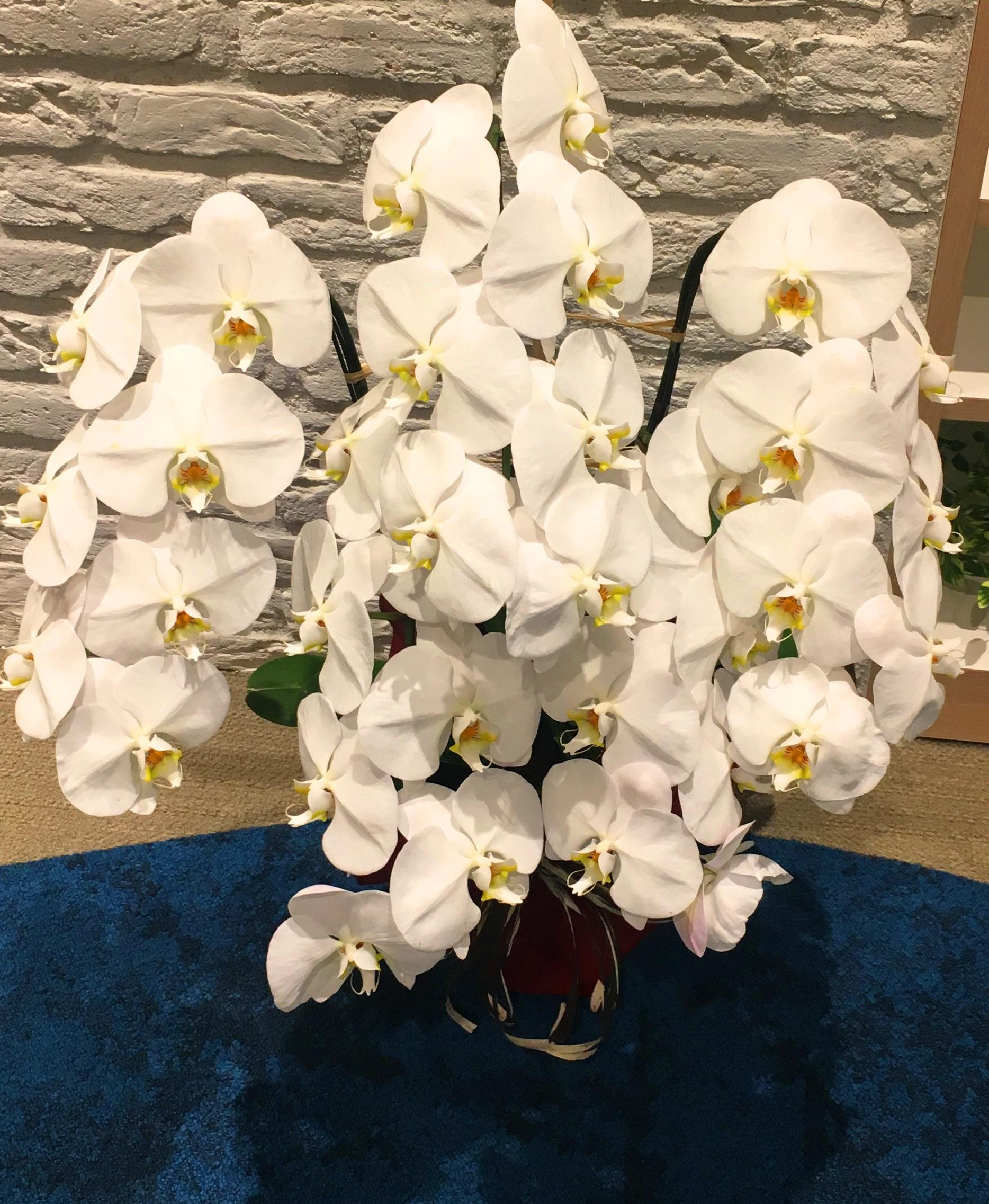 【ナオ花屋の納品事例204】横浜ランドマークタワーの法人企業様へ胡蝶蘭を配達しました!
