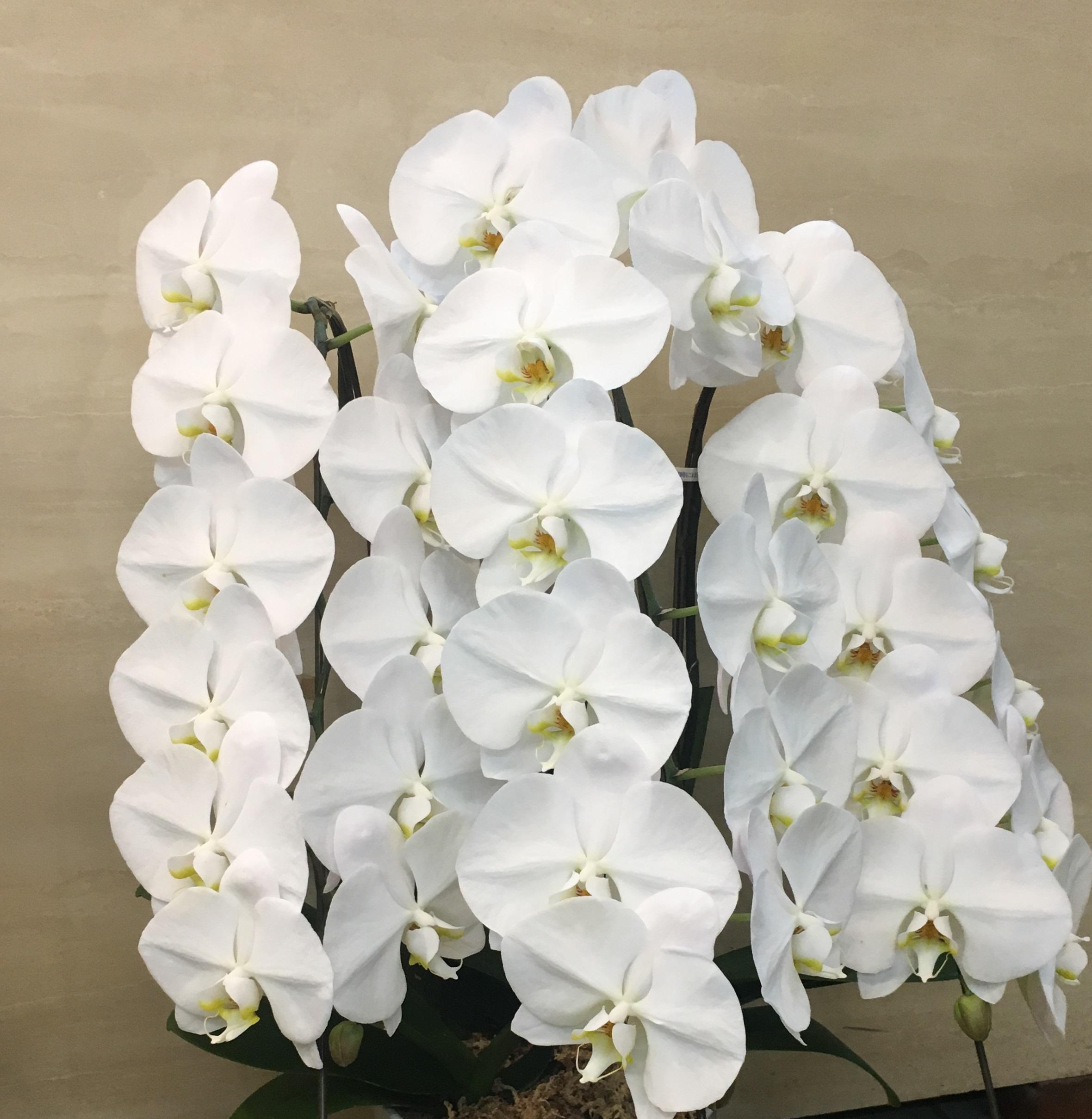 【ナオ花屋の納品事例207】横浜市の神奈川県民ホールへバルーンフラワーを配達しました!