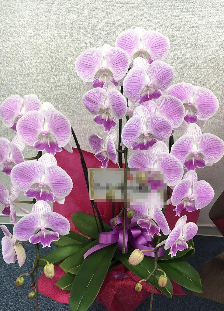 【ナオ花屋の納品事例236】横浜市関内へ開業祝用の胡蝶蘭を当日即日配達しました!