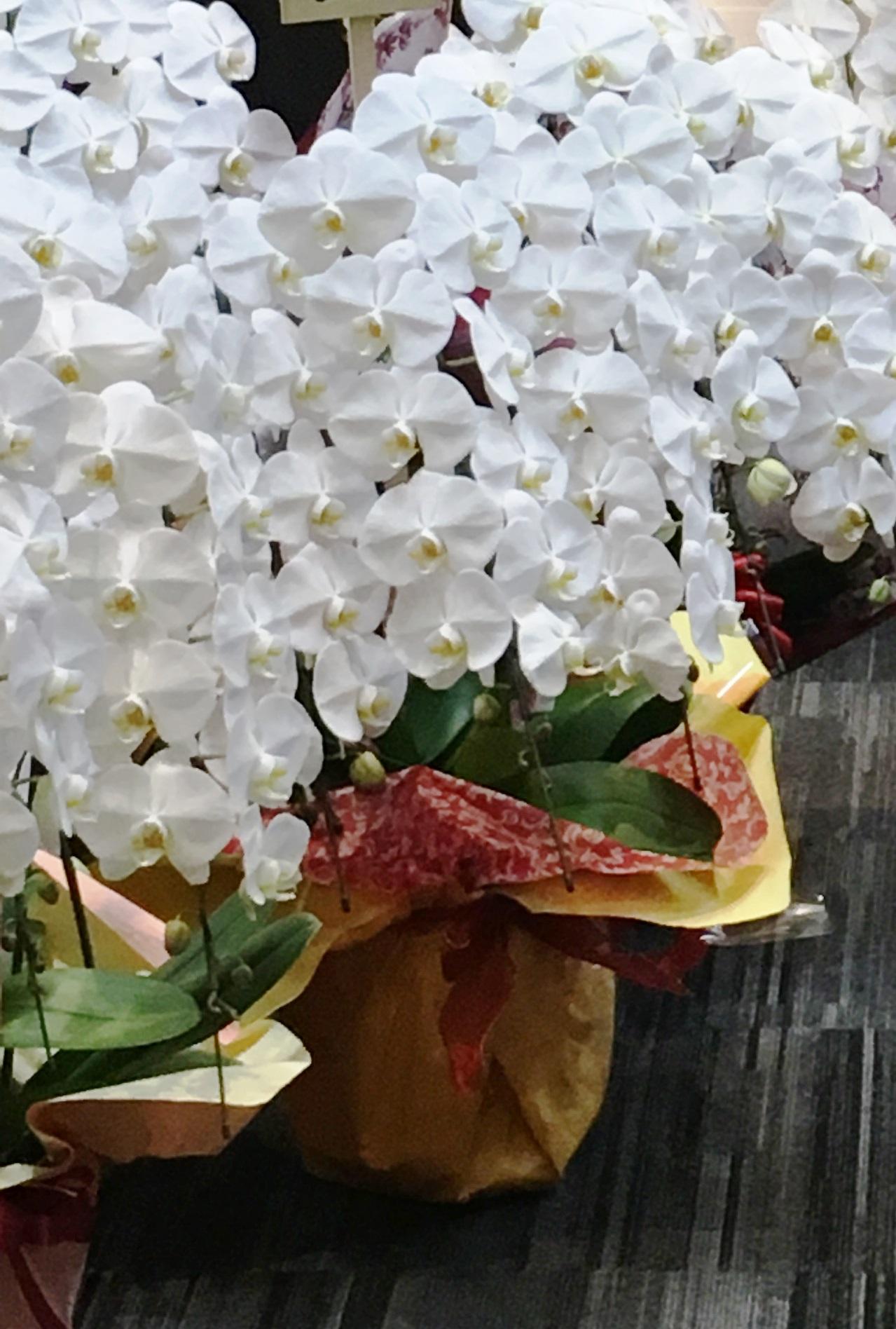 【ナオ花屋の納品事例238】横浜ランドマークタワーの法人企業様へ胡蝶蘭を即日当日配達しました!