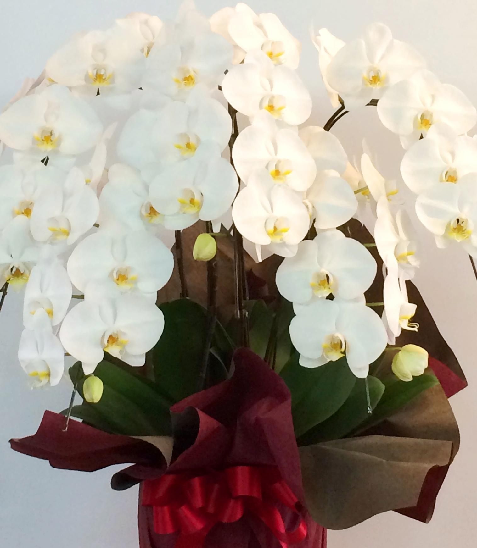 横浜市関内ホールへ胡蝶蘭を即日当日配達しました!【横浜花屋の花束・スタンド花・胡蝶蘭・バルーン・アレンジメント配達事例268】