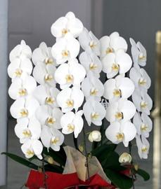 横浜セブンスアベニューへスタンド花を即日当日配達しました!【横浜花屋の花束・スタンド花・胡蝶蘭・バルーン・アレンジメント配達事例281】