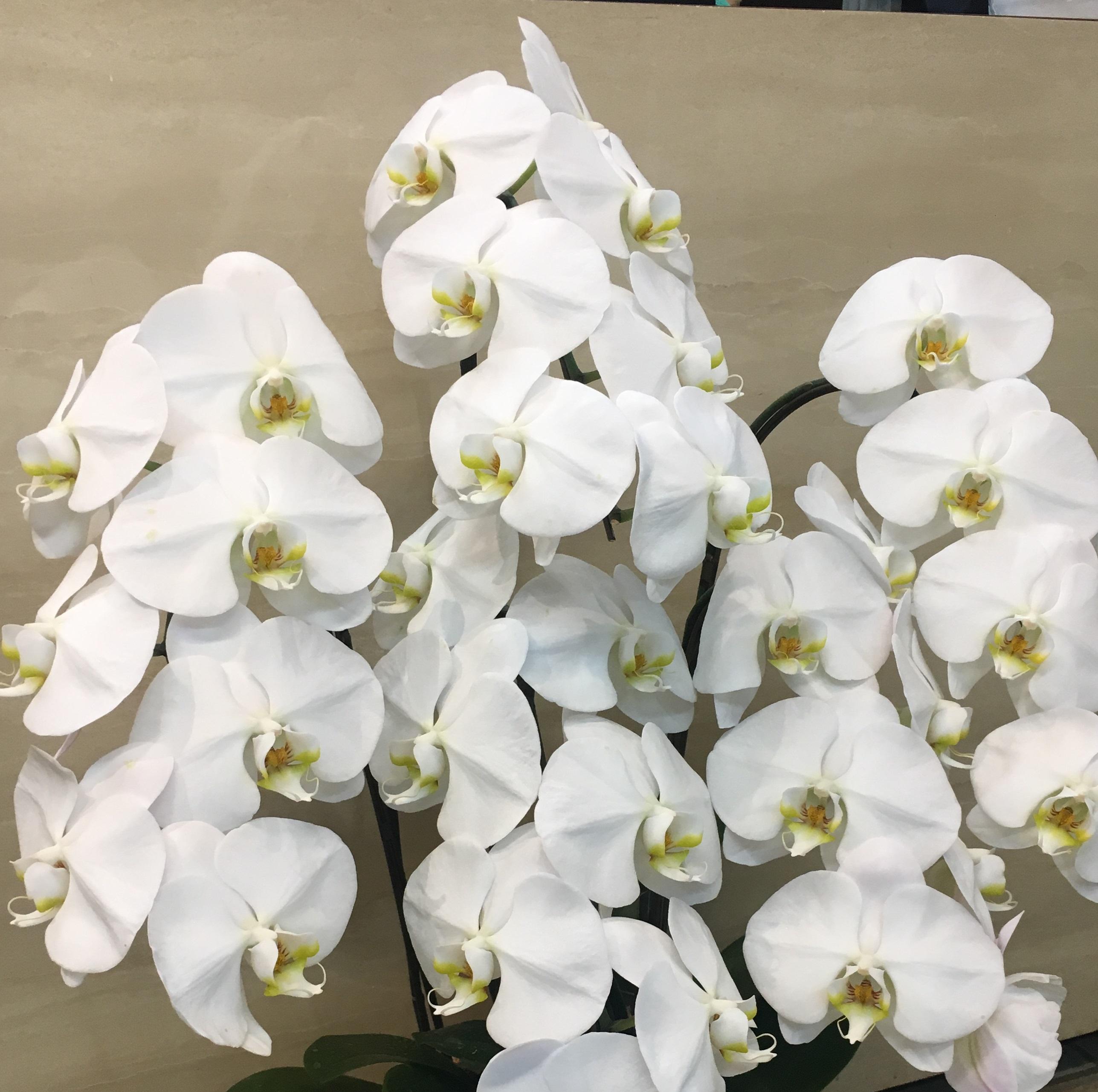 横浜市関内へスタンド花を即日当日配達しました!【横浜花屋の花束・スタンド花・胡蝶蘭・バルーン・アレンジメント配達事例291】
