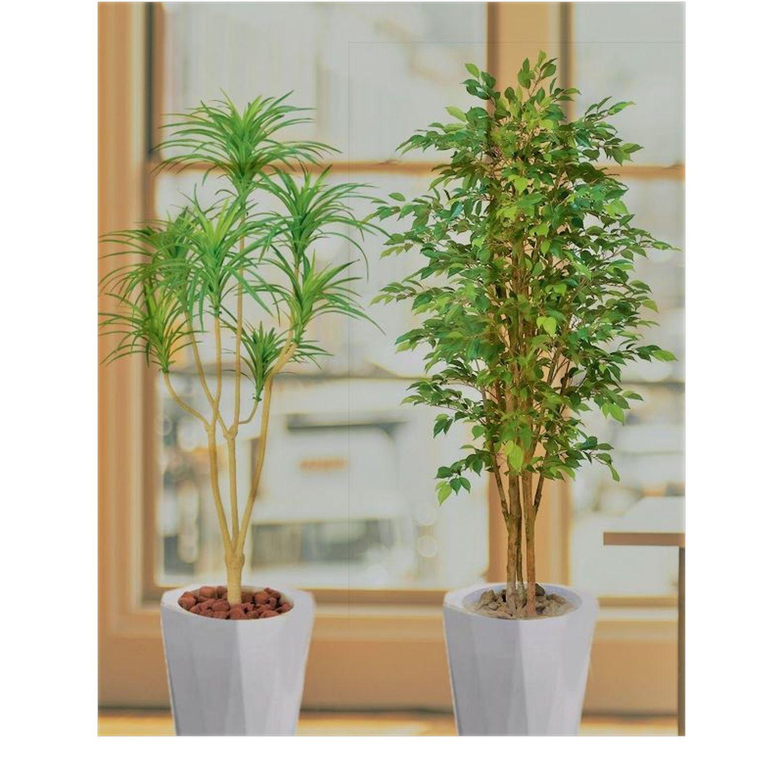 おまかせ観葉植物02