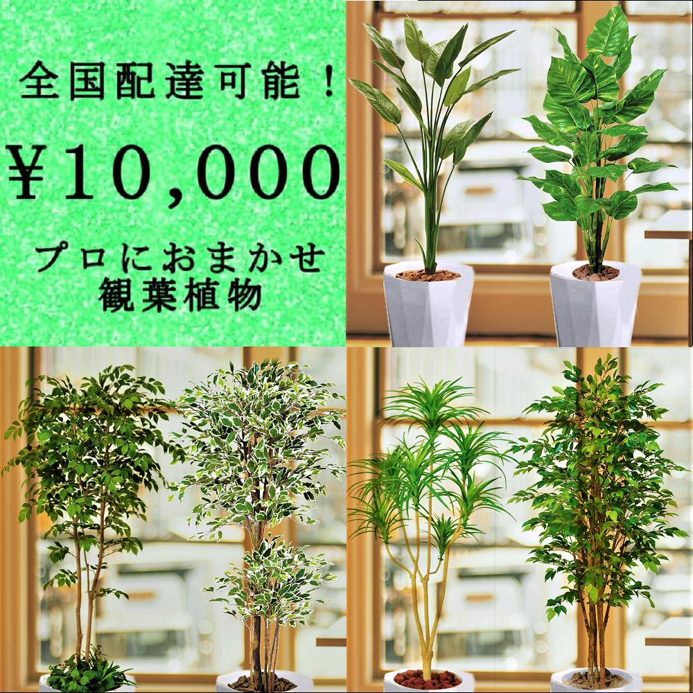 全国配送無料観葉植物1