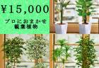 全国配送無料観葉植物2
