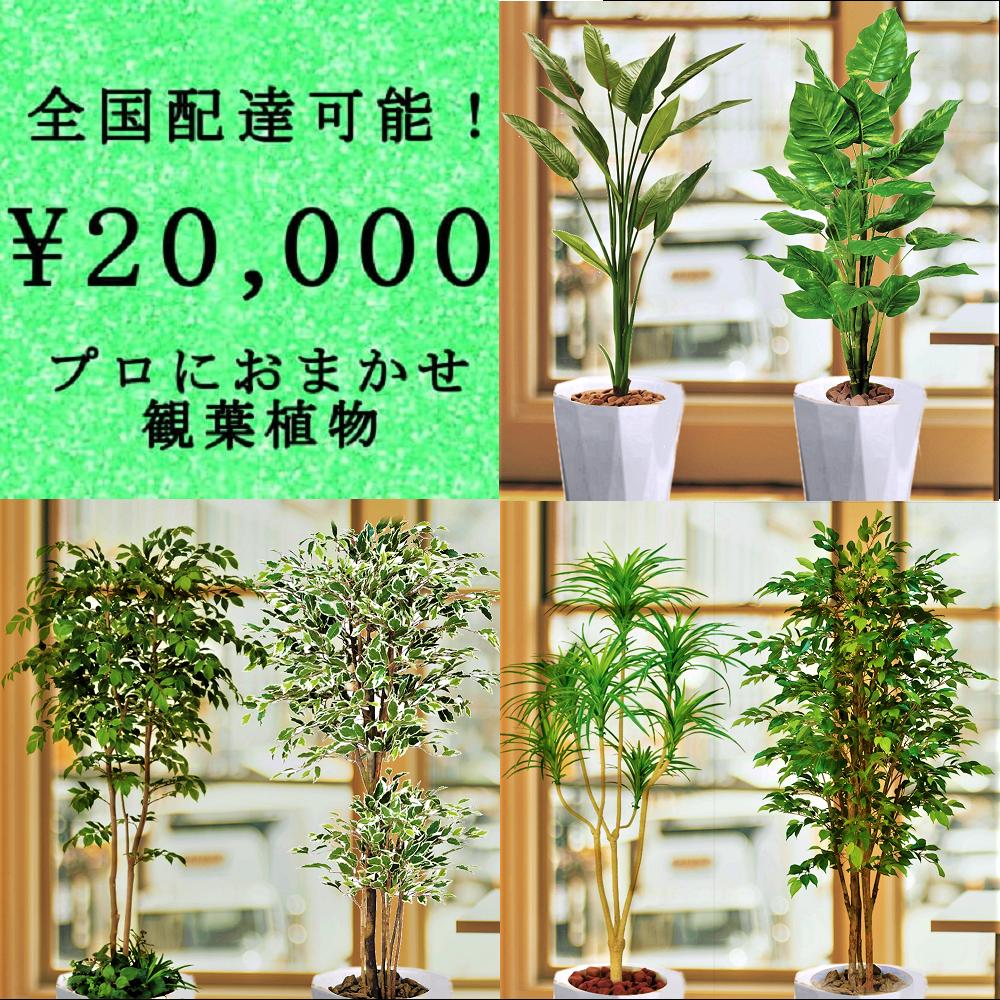 全国配送無料観葉植物5