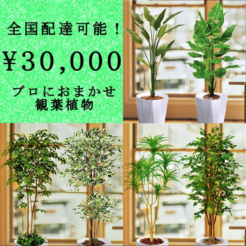 全国配送無料観葉植物6