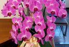 黄色のバラ100本の花束を配達しました。【横浜花屋の花束・スタンド花・胡蝶蘭・バルーン・アレンジメント配達事例493】