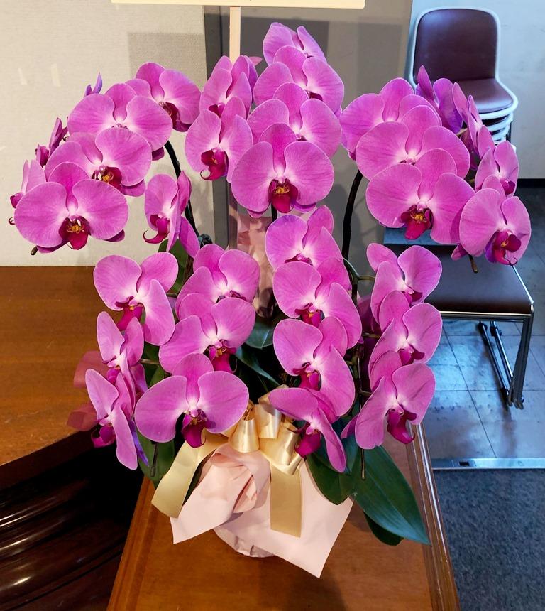 横浜市へ御祝用の胡蝶蘭を配達しました。【横浜花屋の花束・スタンド花・胡蝶蘭・バルーン・アレンジメント配達事例494】