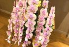 横浜市関内へスタンド花を即日当日配達しました。【横浜花屋の花束・スタンド花・胡蝶蘭・バルーン・アレンジメント配達事例531】