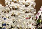 本町へバラ30本の花束を即日当日配達しました。【横浜花屋の花束・スタンド花・胡蝶蘭・バルーン・アレンジメント配達事例524】
