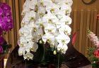 横浜市みなとみらいへスタンド花を即日当日配達しました。【横浜花屋の花束・スタンド花・胡蝶蘭・バルーン・アレンジメント配達事例545】