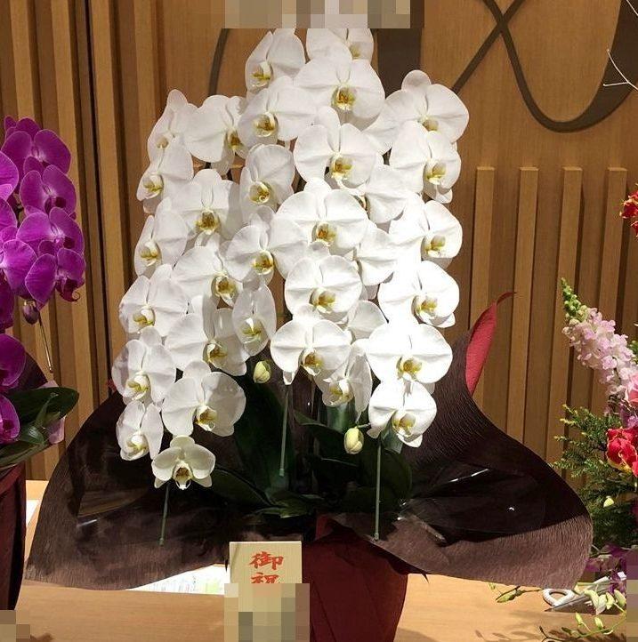 みなとみらいへ開業祝いの胡蝶蘭を即日当日配達しました。【横浜花屋の花束・スタンド花・胡蝶蘭・バルーン・アレンジメント配達事例544】