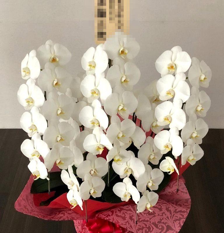 横浜市みなとみらいへ胡蝶蘭を配達しました。【横浜花屋の花束・スタンド花・胡蝶蘭・バルーン・アレンジメント配達事例587】