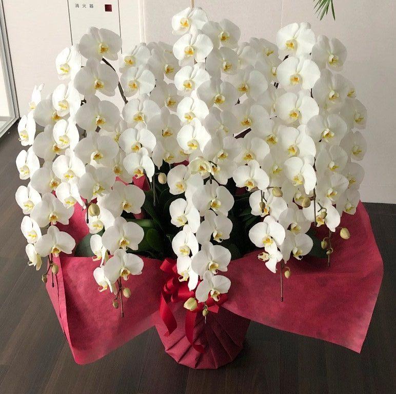 横浜市西区みなとみらいへ胡蝶蘭を配達しました。【横浜花屋の花束・スタンド花・胡蝶蘭・バルーン・アレンジメント配達事例595】