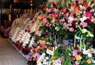 横浜市西区浅間町へ胡蝶蘭を配達しました。【横浜花屋の花束・スタンド花・胡蝶蘭・バルーン・アレンジメント配達事例589】