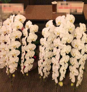 関内福富町へ胡蝶蘭を2つ配達しました。【横浜花屋の花束・スタンド花・胡蝶蘭・バルーン・アレンジメント配達事例601】