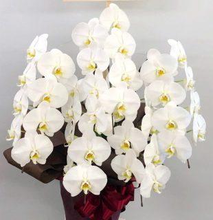 横浜市関内へ胡蝶蘭を即日当日配達させていただきました。【横浜花屋の花束・スタンド花・胡蝶蘭・バルーン・アレンジメント配達事例652】