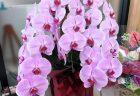 横浜市関内へバラの花束100本を配達させていただきました。【横浜花屋の花束・スタンド花・胡蝶蘭・バルーン・アレンジメント配達事例653】