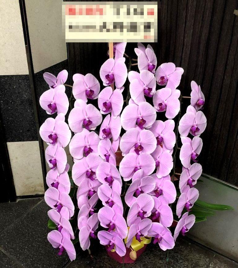 横浜市関内へ胡蝶蘭を即日当日配達させていただきました。【横浜花屋の花束・スタンド花・胡蝶蘭・バルーン・アレンジメント配達事例675】