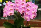 横浜市南幸のJR横浜タワーへ胡蝶蘭を配達させていただきました。【横浜花屋の花束・スタンド花・胡蝶蘭・バルーン・アレンジメント配達事例685】