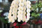 NEWoMan横浜へ観葉植物を即日当日配達させていただきました。【横浜花屋の花束・スタンド花・胡蝶蘭・バルーン・アレンジメント配達事例687】