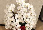 横浜市西区南幸へ花束を配達しました。【横浜花屋の花束・スタンド花・胡蝶蘭・バルーン・アレンジメント配達事例725】