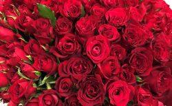 横浜ロイヤルパークホテルへバラの花束を即日当日配達しました。【横浜花屋の花束・スタンド花・胡蝶蘭・バルーン・アレンジメント配達事例755】