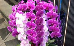 横浜市関内へ胡蝶蘭を即日当日配達しました。【横浜花屋の花束・スタンド花・胡蝶蘭・バルーン・アレンジメント配達事例763】