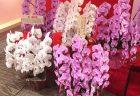 横浜市関内へスタンド花を即日当日配達しました。【横浜花屋の花束・スタンド花・胡蝶蘭・バルーン・アレンジメント配達事例806】