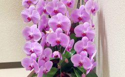 横浜市花咲町へ胡蝶蘭を即日当日配達しました。【横浜花屋の花束・スタンド花・胡蝶蘭・バルーン・アレンジメント配達事例849】