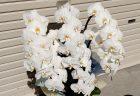 横浜市西区みなとみらいへ花束を即日当日配達しました。【横浜花屋の花束・スタンド花・胡蝶蘭・バルーン・アレンジメント配達事例875】