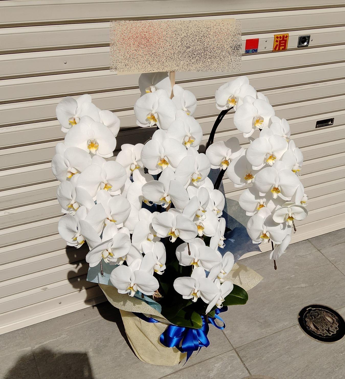 横浜市西区へ胡蝶蘭を配達しました。【横浜花屋の花束・スタンド花・胡蝶蘭・バルーン・アレンジメント配達事例876】