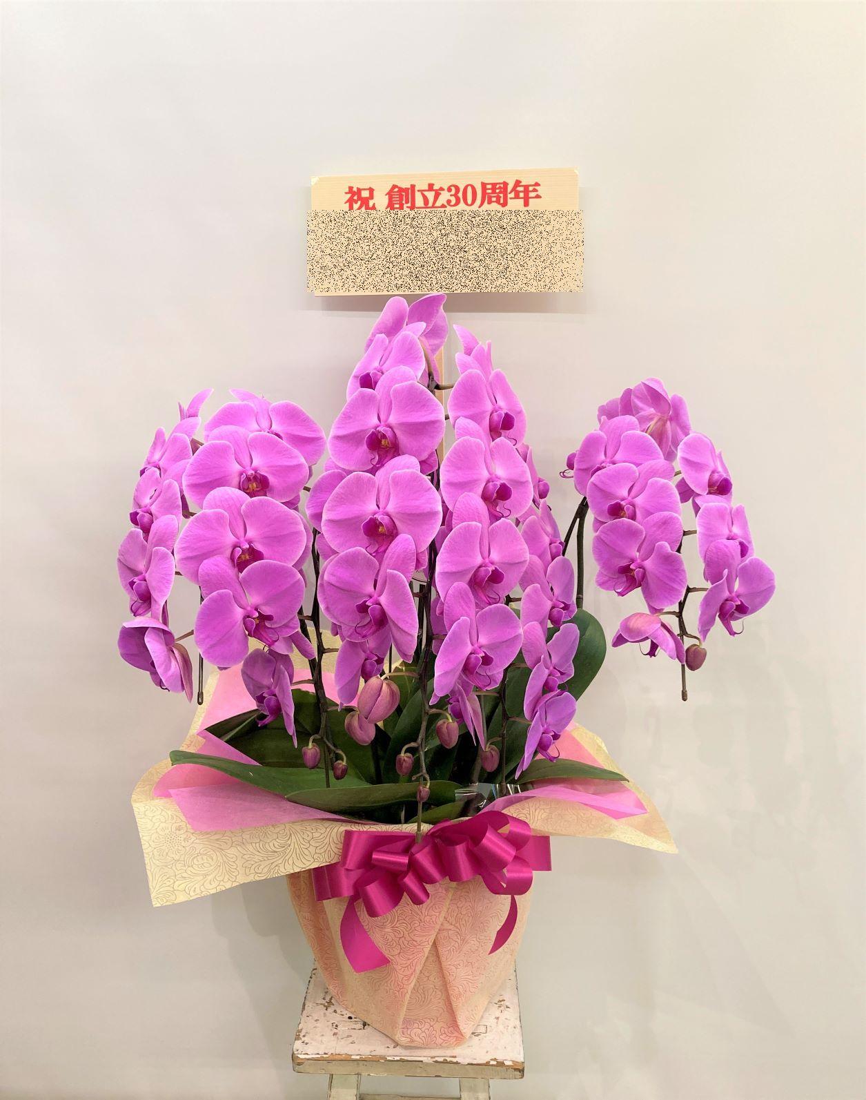 みなとみらいギャラリーへ胡蝶蘭を配達しました。【横浜花屋の花束・スタンド花・胡蝶蘭・バルーン・アレンジメント配達事例899】