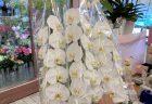 横浜市西区高島へスタンド花(スタフラ)を配達しました。【横浜花屋の花束・スタンド花・胡蝶蘭・バルーン・アレンジメント配達事例911】