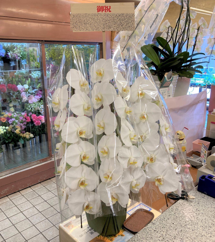 横浜市中区長者町へ胡蝶蘭を即日当日配達しました。【横浜花屋の花束・スタンド花・胡蝶蘭・バルーン・アレンジメント配達事例910】