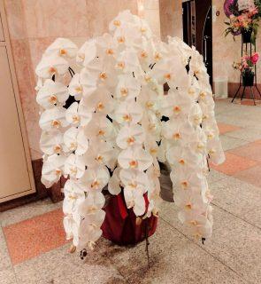 横浜市関内へ7本立の胡蝶蘭を配達しました。【横浜花屋の花束・スタンド花・胡蝶蘭・バルーン・アレンジメント配達事例929】